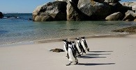/_uploads/images/branch_tours/southafricanature_day13_boulderbeach.jpg