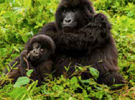 9-Day Uganda & Gorillas Overland Adventure with G Adventures